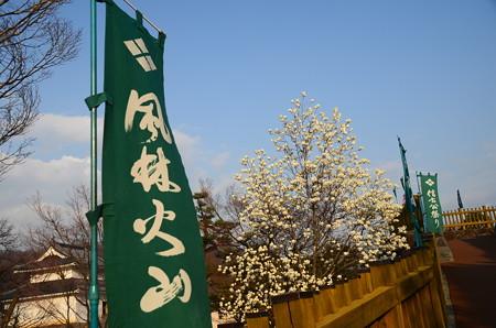 白木蓮咲く舞鶴城公園