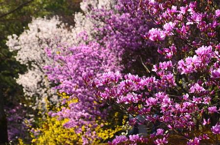 百花苑の春