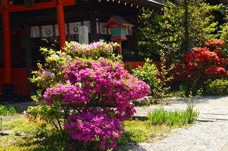 躑躅咲く天寧寺