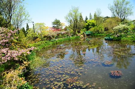 初夏のモネの池
