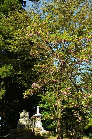 最澄上人像と桜