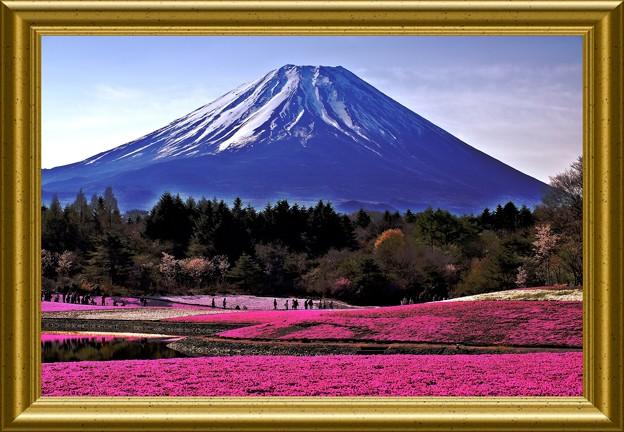芝桜と富士の絶景