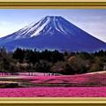 写真: 芝桜と富士の絶景