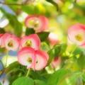 可愛らしく咲いて