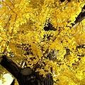 Photos: 秋見上げて