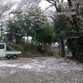 Photos: 1_桜の絨毯
