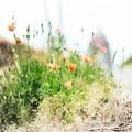 Photos: weeds
