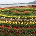 ぐるぐる円を描くチューリップ花壇