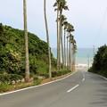 ロングビーチへのヤシの木ロード