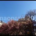 写真: DSC08591