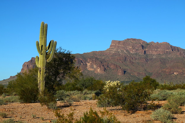 Red Cliff Mountain&Cactus