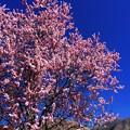 Spring~♪