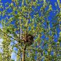 Photos: Robinの巣♪