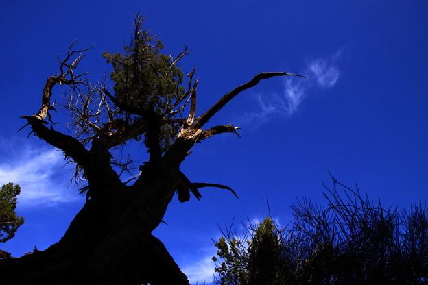 枯れ木のダンス~♪