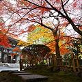 Photos: 『秋の装い。。。』