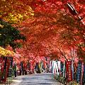 『秋の散歩道。。。』