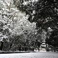 写真: 『モノクローム。。。』 ~熱田神宮~