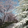 Photos: 春の競演