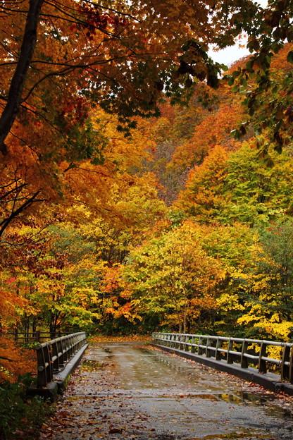 Photos: 葛根田渓谷~滝ノ上温泉付近の紅葉・2