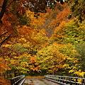 葛根田渓谷~滝ノ上温泉付近の紅葉・2