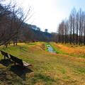 小川のあり風景2