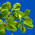 Photos: biue & green