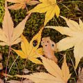 Photos: ハニャ男、紅葉狩り?