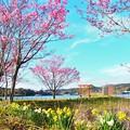 亀山湖のさくら (3)