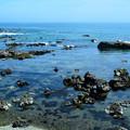 五浦海岸 (3)