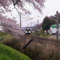 大河原ひと目千本桜-06357
