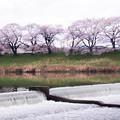 大河原ひと目千本桜-06351