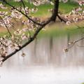 大河原ひと目千本桜-06344