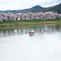 大河原ひと目千本桜-06337