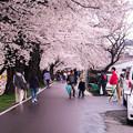 Photos: 大河原ひと目千本桜-06335
