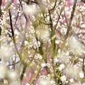 Photos: 寝ぼけ眼の春