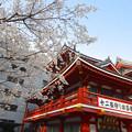 写真: 大須観音の境内にある桜が満開(2015/3/22)No - 2