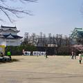 写真: 名古屋城天守閣と満開の桜(金さん・銀さんが植樹した「エドヒガン」、2015/3/21) - 1