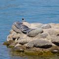 写真: 木曽川沿いに点在する人工物と、その上で休む鳥 - 3