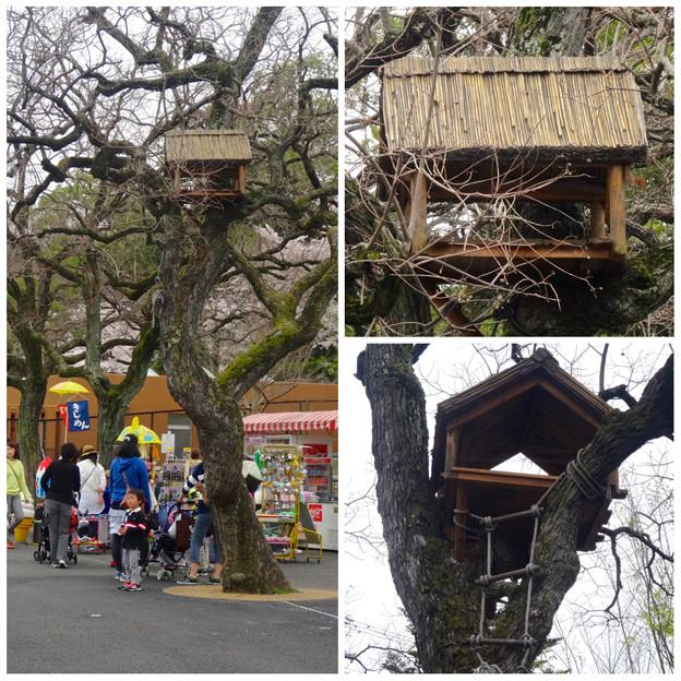 東山動植物園:ゾージアム(新アジアゾウ舎)前の木の上に…鳥小屋?