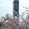 写真: 春の東山動植物園 No - 006:満開の桜越しに見た、東山スカイタワー(2015/4/4)
