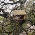 写真: 春の東山動植物園 No - 022:ゾージアム(新アジアゾウ舎)の前にある木に…鳥小屋?