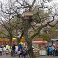 写真: 春の東山動植物園 No - 023:ゾージアム(新アジアゾウ舎)の前にある木に…鳥小屋?