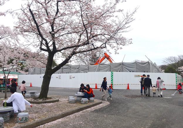 春の東山動植物園 No - 043:休憩所があった辺りが工事中(2015/4/4)