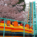 写真: 春の東山動植物園 No - 152:満開の桜(2015/4/4)