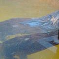 写真: 春の東山動植物園 No - 163:水槽の端を楽しそうにひっかく、アメリカビーバー