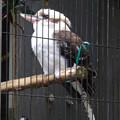 写真: 春の東山動植物園 No - 196:笑わない(鳴いてない)ワライカワセミ
