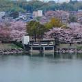 Photos: 桜の時期、水の塔から見下ろした落合公園(2015/4/7)No - 10