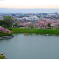 Photos: 桜の時期、水の塔から見下ろした落合公園(2015/4/7)No - 12