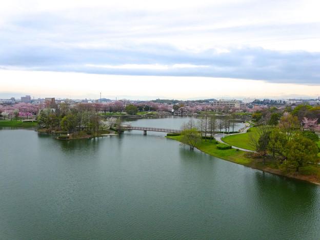 Photos: 桜の時期、水の塔から見下ろした落合公園(2015/4/7)No - 19