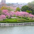 Photos: 桜の時期、水の塔から見下ろした落合公園(2015/4/7)No - 30
